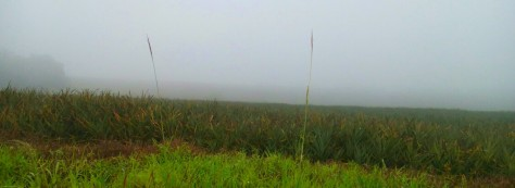 The vast pineapple plantations we passed. Despite the rains, it was an awesome panoramic view.